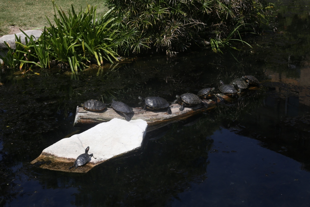 The Turtle Pond at The University of Texas at Austin.