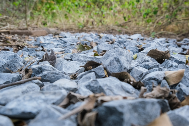 03.17.20_Estero Llano Grande State Park_Fujifilm XH1_WEB_Ben Briones-0003