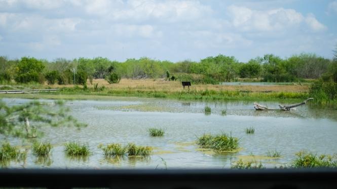 03.17.20_Estero Llano Grande State Park_Fujifilm XH1_WEB_Ben Briones-6778