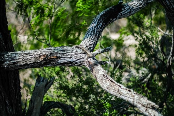 03.17.20_Estero Llano Grande State Park_Fujifilm XH1_WEB_Ben Briones-6786