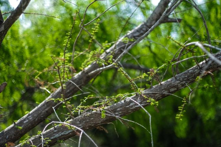 03.17.20_Estero Llano Grande State Park_Fujifilm XH1_WEB_Ben Briones-6837