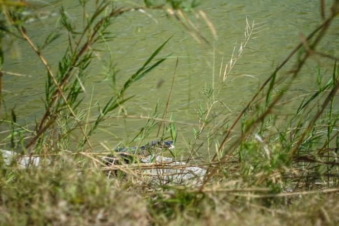 03.17.20_Estero Llano Grande State Park_Fujifilm XH1_WEB_Ben Briones-6852