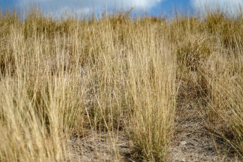 03.17.20_Estero Llano Grande State Park_Fujifilm XH1_WEB_Ben Briones-6862