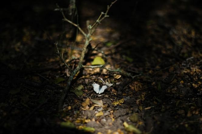 03.17.20_Estero Llano Grande State Park_Fujifilm XH1_WEB_Ben Briones-6891