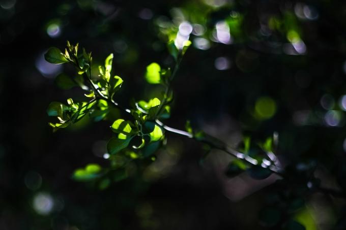 03.17.20_Estero Llano Grande State Park_Fujifilm XH1_WEB_Ben Briones-6939